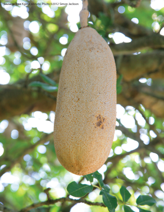 Herbs penile natural growth for 3 Ways